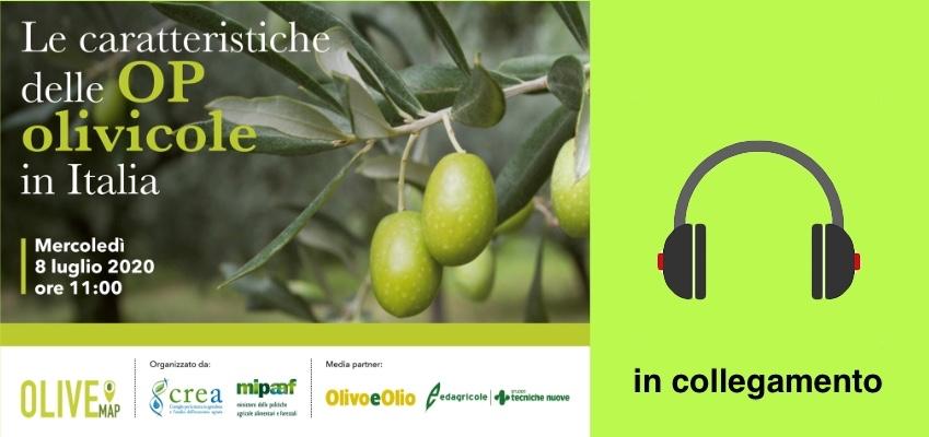 Le caratteristiche delle OP olivicole in Italia