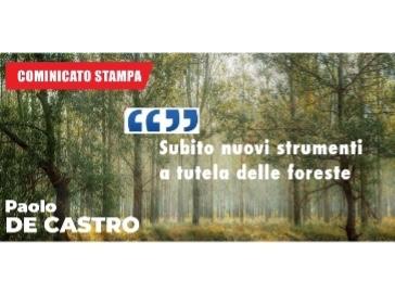 De Castro: subito nuovi strumenti a tutela delle foreste