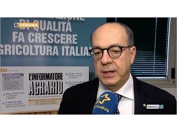 Tele Nuovo TG Verona